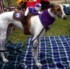 cutest greyhound dog costumes - Google Search