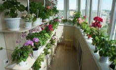 Valódi virágoskertté alakíthatod az otthonod! A titok a trágyázásba rejlik, 9 nélkülözhetetlen tipp! Anniversary Decorations, Balcony Garden, House Plants, Colorado, Floral, Outdoor Decor, Nature, Flowers, Gardens