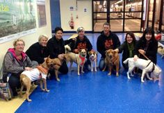 The latest six arrive in UK. Many thanks to Michelle and Brian for getting them there safely. To see more photos and keep up with their progress visit Soi Dog adopters club page at https://www.facebook.com/groups/192756567491126/?fref=ts We've arrived :-)