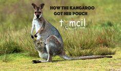 How the Kangaroo Got Her Pouch | Storytelling for Children
