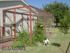 How to build a spacious outdoor cat enclosure-natural perches and walkways just like at the zoo for the big cats!  Teediddlydee.com