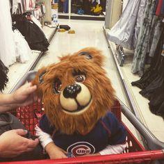 #gocubsgo #bear #halloween