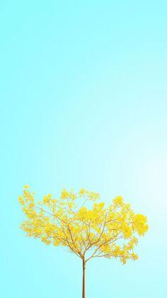 Beautiful Minimalist Spring Wallpaper for iPhone. Summer Wallpaper Phone, Spring Wallpaper Hd, Tea Wallpaper, Wallpaper Gratis, Iphone Wallpaper Yellow, Nature Iphone Wallpaper, Drawing Wallpaper, Kawaii Wallpaper, Flower Wallpaper