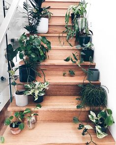Brilliant 12 Elegant Home Stair Design With Ornamental Plants Ideas There are many ways to decorate your stairs, and the inclusion of botanical trends is the best alternative you can take. Nowadays, ornamental plants w. Indoor Garden, Indoor Plants, Home Stairs Design, Stair Design, Plant Aesthetic, Decoration Plante, Stair Decor, Plants Are Friends, Ornamental Plants