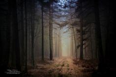 Natural rigidity, Broceliande forest - France