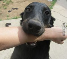 My dog does this as well... This means she loves you!