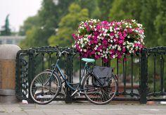 flores de amsterdan