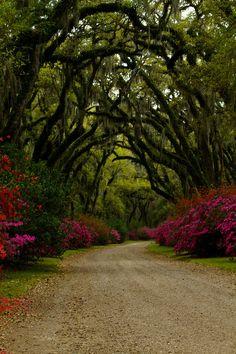 Afton Villa Gardens, Saint Francisville, Louisiana