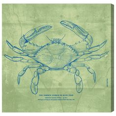"Beachcrest Home The Common Blue Crab - Aqua Graphic Art on Canvas Size: 36"" H x 36"" W x 1.5"" D"