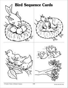 A Bird's Life: Sequence Cards - Alles Über Den Kindergarten Kids Activities At Home, Preschool Activities, Book Activities, Science For Kids, Sequencing Cards, Sequencing Pictures, Kindergarten Math Worksheets, Fun Worksheets, Bird Life Cycle