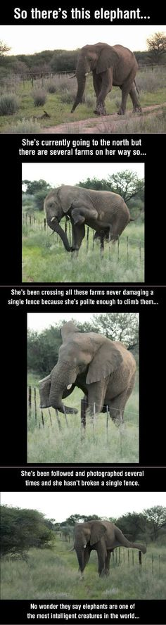 More proof that animals only take action that is necessary! . If only we'd take more guidance from them!
