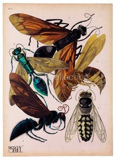 PrintCollection - Insects, Plate 6 by E. Seguy The artist, designer and etymologist E. Seguy was very prolific in the early part of the last century in France. This is part of a larger set of about 14 groups of insects. Art And Illustration, Nature Illustrations, Art Nouveau, Art Deco, Insect Art, Bugs And Insects, Natural History, Artsy, Butterfly