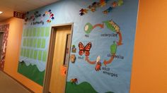 Life cycle of a butterfly bulletin board April 2016