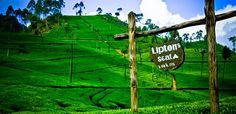 Lipton's Seat - Must visit place in Sri Lanka
