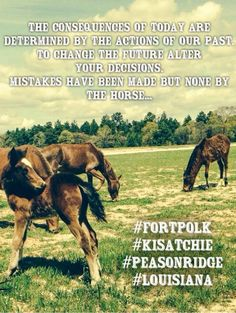 Please SHARE! Join us in helping to protect our unique ‪#‎Louisiana‬ Heritage and the ‪#‎Horses‬ at ‪#‎FortPolk‬ ‪#‎Kisatchie‬ ‪#‎PeasonRidge‬ ‪#‎WWII‬ ‪#‎WildHorses‬ https://www.facebook.com/pages/Fort-Polks-Historic-Cavalry-War-Horse-Herd-Guardians/1484973435133037?fref=ts Petition http://www.petition2congress.com/…/fort-polk-descendants-ww… EMAIL comments to: usarmy.polk.imcom.mbx.pao-ci@mail.mil