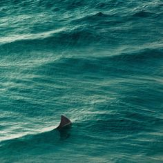 THIS IS SOMETHING I NEVER WANT TO SEE WHEN I'M IN THE OCEAN EVERRRRR!! OMFG!!! GET OUT OF THE WATER NOOOOOOWWWW!!!