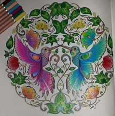 Colouring Coloring Books Humming Birds Secret Gardens Johanna Basford Ideas Painting Hummingbird Drawings
