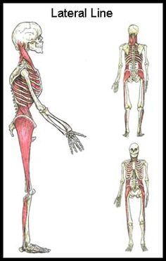 Check out http://structuralwisdom.com!  Structural Wisdom utilizes KMI Structural Integration and Therapeutic massage to improve an individual's mobility, function and overall well being.