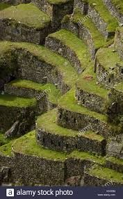 Terrazas De Cultivo Machu Picchu Busqueda De Google In 2020 Food