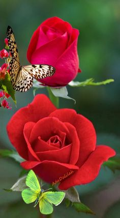 Beautiful Rose Flowers, Beautiful Flower Arrangements, Beautiful Birds, Beautiful Gardens, Beautiful Landscape Wallpaper, Beautiful Landscapes, Swan Painting, Good Night Flowers, Beautiful Morning