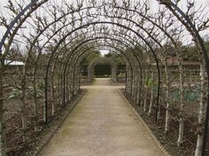 """""""More than 50 'Conference' pear trees trained into an archway at West Dean Gardens in Sussex, UK. Pear trees take develop an aged look quickly. Photograph by Nina Pope via Flickr."""""""