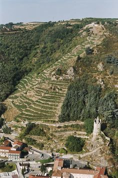 Vignoble de St Joseph sur granites d'origine volcanique