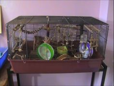 diy mouse cage aaron s woodwork pinterest mouse cage gerbil