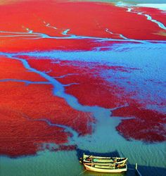 Nada Red Sea in Panjin, China (Province of Liaoning)