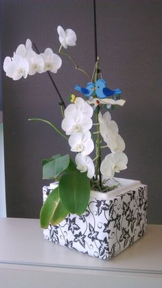 Květináč pro orchidej z polystyrenové krabice...