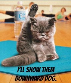 1000 images about yoga humor on pinterest  yoga humor