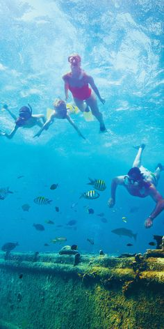 Philipsburg, St. Maarten | Jump into the clear turquoise waters where you can explore an underwater world bursting with colorful coral, tropical fish, and sunken shipwrecks.