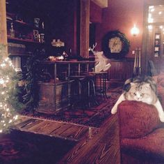 Oriental rugs cover rough-hewn wood floors, and vintage-style bar stools belly up to a high-top table in the living space. One of Taylor Swift's two beloved cats, Meredith Grey, basks in the glow of a Christmas tree.