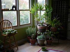 pflegeleichte Zimmerpflanzen wenig Licht Hauspflanzen