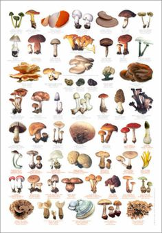 56 Images Of Common Fungi In English, French And German.