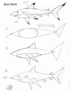 Exquisite Learn To Draw Animals Ideas - Draw Sharks Draw a Basic Shark by D. - Exquisite Learn To Draw Animals Ideas – Draw Sharks Draw a Basic Shark by D… – - Drawing Lessons, Drawing Techniques, Drawing Tips, Drawing Sketches, Art Lessons, Painting & Drawing, Basic Drawing, Sketching, Fish Drawings