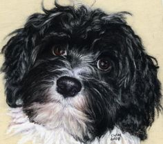 Havanese...toy breed related to the Bichon. Great personality in a little package. Hypoallergenic.