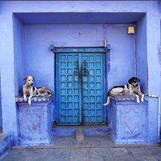 pups + architecture + blue painted building