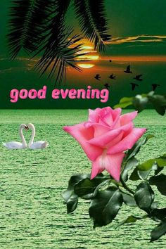 Romantic Good Night Messages, Good Evening Messages, Good Evening Greetings, Good Morning Flowers Gif, Good Night Flowers, Good Morning Happy Monday, Good Morning Good Night, Latest Good Morning Images, Evening Pictures
