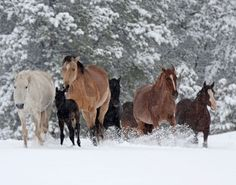 Black Hills Wild Horse Sanctuary Home Page  Keep wild horses free!!! They deserve it!