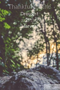 When you know the drought, you can be thankful for the harvest. Don't understand that quote? Read how this HVFH writer describes and applies it. #hvfh #blogger #theharvest  Her View from Home blog post.