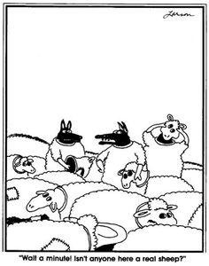 Wait a minute! Isn't anyone here a real sheep?