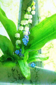'Vergissmeinnicht und Maiglöckchen Bouquet ' von Tanja Riedel bei artflakes.com als Poster oder Kunstdruck $18.03