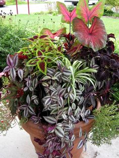Container Gardening | IMG 1851 768x1024 Partial Shade Container Garden; Indoor Tropicals and ...