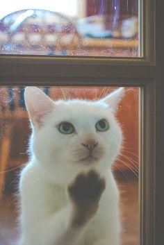 "k-uncertainty: "" mariusu: "" (via Let Me In… Please? | Flickr - Photo Sharing!) "" Please open here "" Beautiful !!! O/"