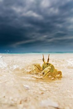 Crab by Marco Gaiotti on 500px