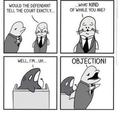 Old Memes, Dankest Memes, Jokes Quotes, Haha, Free Willy, Funny Comics, Popular Memes, Comic Strips, Best Funny Pictures