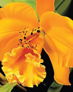 ¿Sabéis por qué las ranas arborícolas del amazonas son de colores tan brillantes? Para intimidar a los depredadores!!!  si eres de un color amarillo brillante, no te estás escondiendo, por el contrario....quieres que todo el mundo te vea. ¿sabéis por qué? pues porque las ranas de colores brillantes son venenosas!!!!