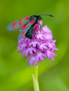 . Purple Garden, Peak District, Moth, Bugs, Random Stuff, Nature, Photography, Life, Design