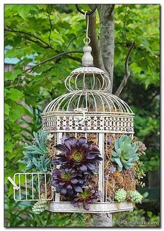Container DIY that is fun to do. Take a decorative hinged bird cage, line it with moss, plant it with succulents—hang and enjoy.""