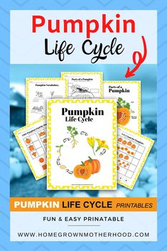 This fun and easy pumpkin life cycle printable is a great homeschool or classroom activity. Science and math concepts included. Great for primary grades or preschool. | www.homegrownmotherhood.com #thanksgivingprintable #printable #homegrownmotherhood Classroom Activities, Activities For Kids, Pumpkin Life Cycle, Biblical Marriage, Math Concepts, Activity Ideas, Life Cycles, Homemaking, Homeschool